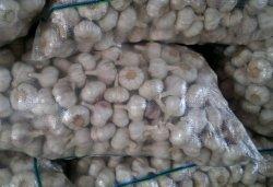 2013 нового урожая чеснок (не менее 5,5 см)