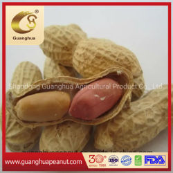 Shell From山東の熱いSale New Crop Roasted Peanut