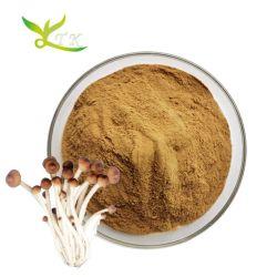 Natürliche Agrocybe Chaxingu Extrakt Polysaccharid 30% Teebaum Pilz-Extrakt Pulver