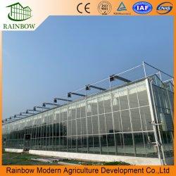 하이드로폰스 성장 시스템을 갖춘 벤로 할로우 이중 강화 유리 온실 야채/꽃/토마토/농장/정원/에코 레스토랑/농가