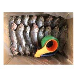 Горячая продажа Гги Тилапия рыбные зажигания замороженные оптовой саротинодоны в Китае