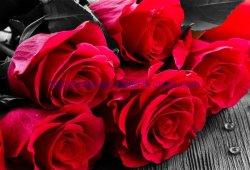 Pittura Rosa Mg009 del diamante di DIY