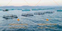 Compartimento da piscicultura quadrados