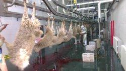 Halal Sheep Slaughter Line voor slachthuis Abattoir met apparatuur