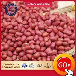 Venta caliente núcleo nueva cosecha de maní fábrica china