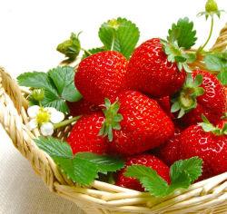 가벼운 시럽에 있는 중국 신선한 과일 통조림 신선한 딸기
