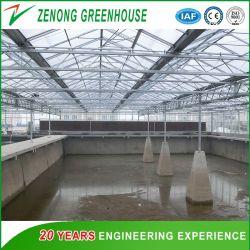 Invernadero Multispan de alta calidad para productos acuáticos