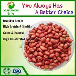 La piel roja cruda de maní maní los granos en venta con precio