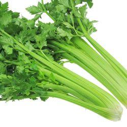 Nourriture verte de qualité Super surgelés IQF le céleri et les légumes surgelés