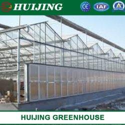 El policarbonato /Agricultura/invernadero vegetal de la hidroponía control climático automático del sistema para el tomate/Flower/fresa/Granja/Pepino Lechuga//Pepper