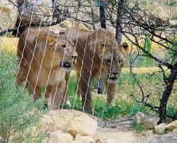 Corde à virole maille en acier inoxydable de garantir la sécurité des animaux et les visiteurs