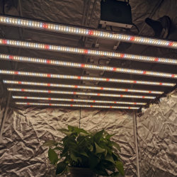Bester Verkauf Soem-volles Spektrum 1000W LED wachsen für Hydroponik hell