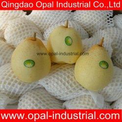 中国のフルーツの風味がよいYaの熱い販売のナシ