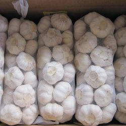 Condições normais de alho branco com folga Global