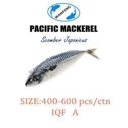 400-600 Класс а Саба скумбрии / Тихого океана скумбрии для продажи на рынке