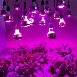 LED wachsen hellen PFEILER, den realer Chip NENNWERT der Energien-50W LED Glühlampe wachsen, vertikale bewirtschaftenled Licht wachsen
