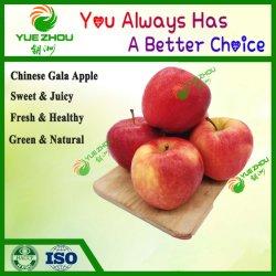 2019 nouvelle récolte de bonne qualité Gala frais Rouge Apple