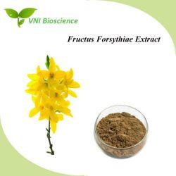 حاصل على شهادة ISO 100% من Hypericins الطبيعي فورسيثيا سوزلا فورسيثيا ريستري