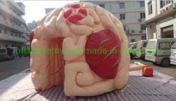 Nieuw Ontwerp die het Opblaasbare Model van Hersenen voor Medisch Tentoonstelling/Onderwijs adverteren