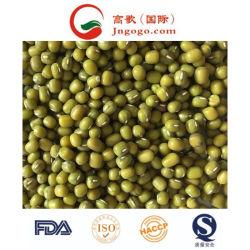 Neue Ernte Gute Qualität Grüne Mungbohne