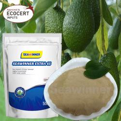 Sinergia de herbicidas, pesticidas sinergia, Extrato de alga verde natural em pó, sinergia de adubo