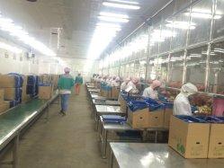 L'oignon jaune frais pelés 2020 nouvelle récolte dans le Gansu Base avec le meilleur prix et de bonne qualité de l'exportation au Japon