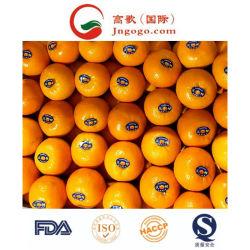 中国の新しい穀物の新しいマンダリンオレンジの製造者