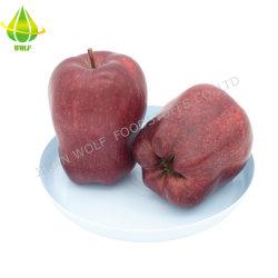شركة Huaniu Apple/Red Fresh Fuji Apple/Qinguan Apple/Gala Apple/Green Apple/Red Star Apple