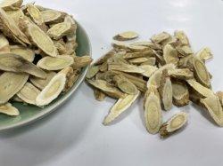 Hierba china tradicional Astragalus originado a partir de la provincia de Gansu para vigorizar el Qi y sangre o hierba tónica/hierba Huang Qi