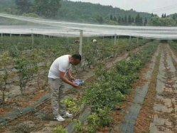 Produtos agrícolas fabricante de Plástico Preto Tecidos de cobertura de solo evitar Tree pano de plantas daninhas Mat