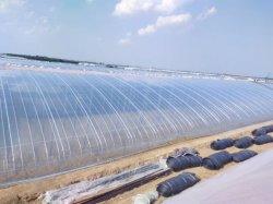 الزراعة الزراعة الزراعة النباتات النباتية النباتية الزراعة الحرارية العزل الحراري قابلة للتسرب غشاء بلاستيكي LDPE OPP