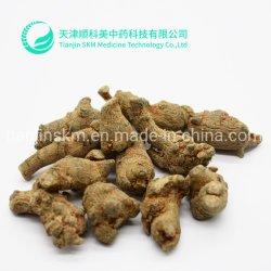 Plantas naturais de plantas aromáticas Notoginseng Fatia de raiz/Sanchi Extraia/Medicina / Saúde / Alimentar Ervas Aromáticas