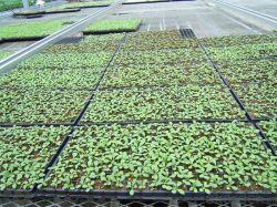 Jardim Sementes germina o tabuleiro de arranque da bandeja de mudas de arroz de plástico de poliestireno Bujão Viveiro Flower Pot