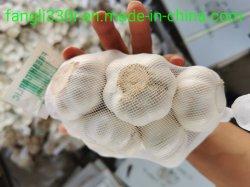 Chinees het Hete Plantaardige Witte Knoflook 5.5cm+ van het Gewas van de Gember Verse Nieuwe