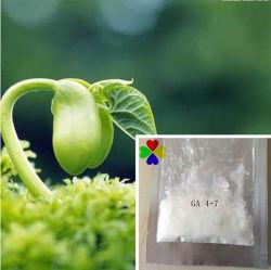 Régulateur de croissance végétale nutritif engrais foliaires GA4+7