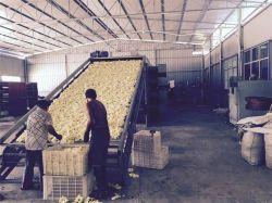 Sèche-linge industriel à courroie en maille multicouche pour fruits déshydratés et Légumes