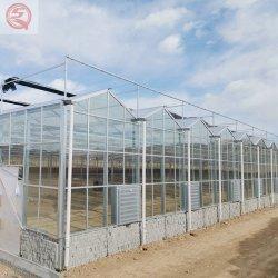Commercial/agriculture/industriel/économiques/de verre flotté Multi-Span/Venlo serre avec irrigation fertilisante/hydroponique/systèmes d'irrigation pour Légumes Tomates//chou