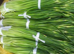 Fresh Garlic Sprout