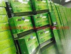 元のLeptinの健康の緑のコーヒー1000減量の茶