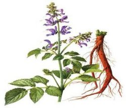 Выдержка Salvia выдержки Salvia Miltiorrhizae