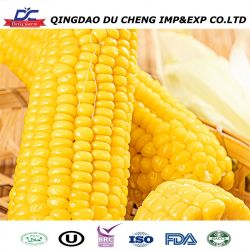 2020 Neue Ernte IQF Frozen Baby Sweet Corn