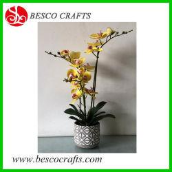 Orchidea reale artificiale del POT del cemento della stampa di tocco 3D