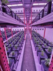 730Нм Ира Osram LED расти в панели освещения 240W