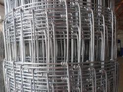 Champ haute résistance sur le fil de moutons de clôture de grillage de séparation de haute qualité