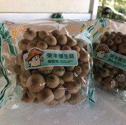 A Buna Shimeji Marrom cogumelo fresco com boa Quaility