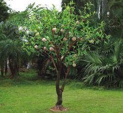 LED haute de la simulation d'arbres fruitiers Peach Tree lumière artificielle pour le jardin et parc Streeting d'éclairage de décoration