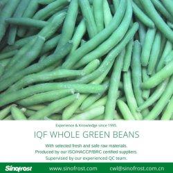 IQF حبوب خضراء كاملة، حبوب خضراء كاملة مجمدة، مكونات الفاصوليا الخضراء IQF، حبوب الفاصوليا الخضراء المجمدة، خضار IQF، خضار مجمدة، طعام مجمد