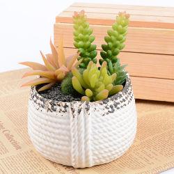 Maceta de cerámica de porcelana blanca de mesa Mini Cactus suculentos sembradora para la decoración del hogar