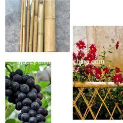 L'agriculture de bâtonnets de bambou matières Bambou pôles pour la plantation de pépinière