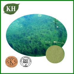 Водный раствор с высоким качеством спирулины извлечения 52%, Phycocyanin Kjeldahl